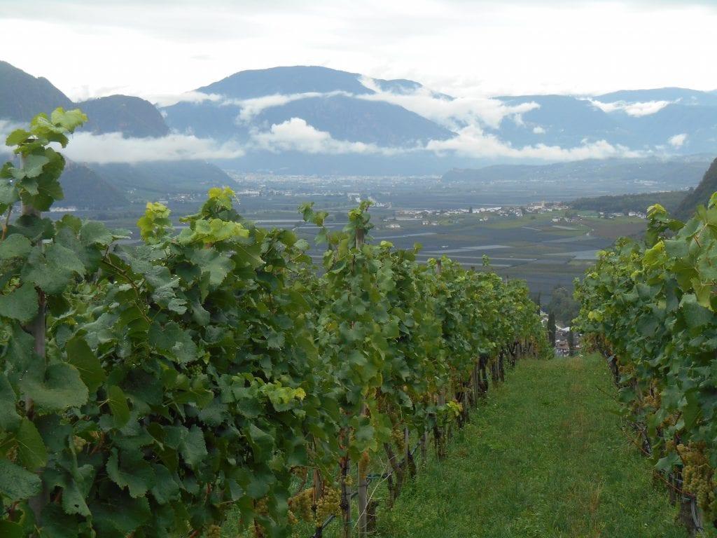 Vigne dell'Alto Adige