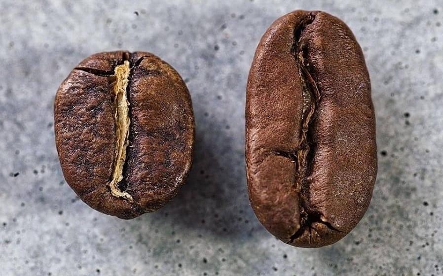 Due chicchi di caffè da Faro