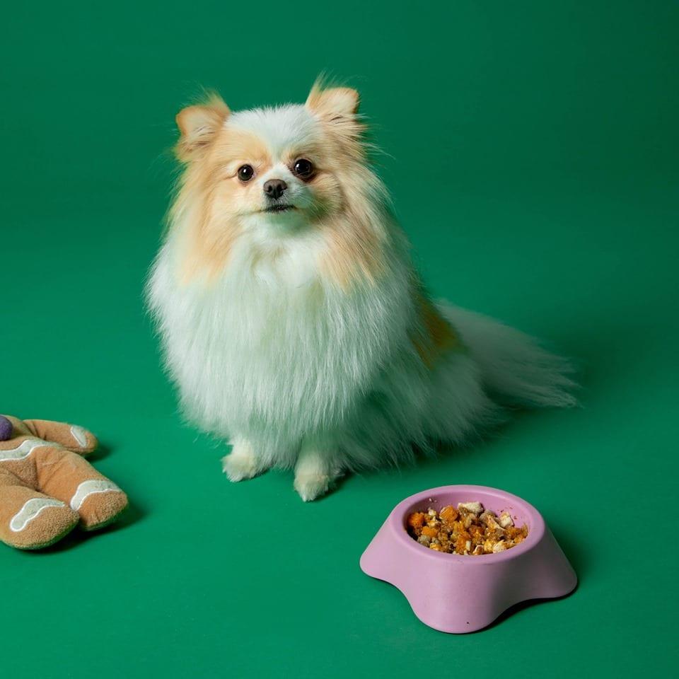 Un cane di taglia piccola con ciotola di cibo e pupazzo di pezza