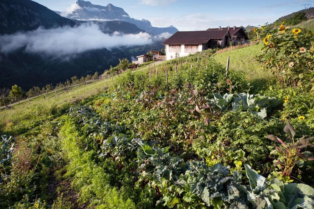 L'orto di Harald Gasser a Barbiano, sulle montagne della Valle Isarco