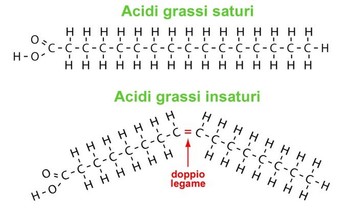 oli vegetali acidi-grassi-legami