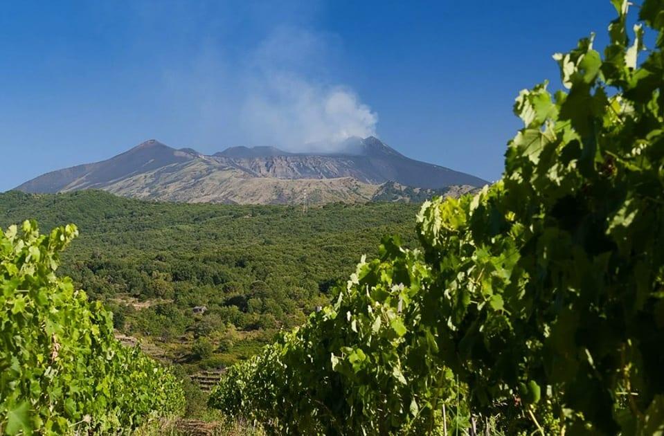 Ricci Weekender a Catania 2019: l'Etna visto dalle vigne di Pietradolce