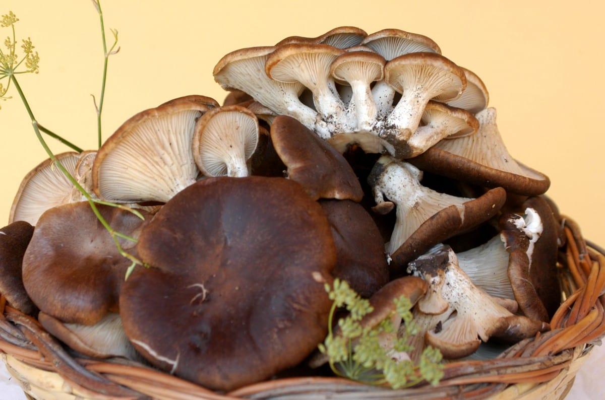 Funghi cardoncelli e tartufi. Dove acquistarli e mangiarli in Puglia