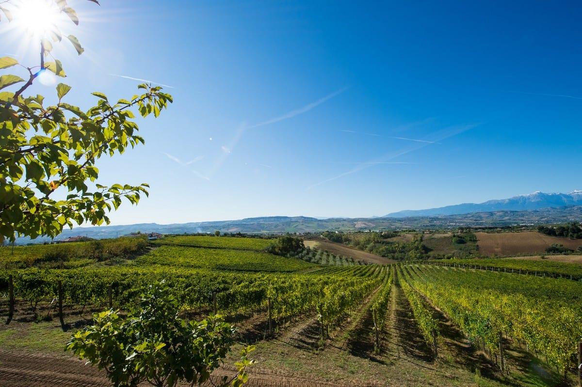 """Umani Ronchi punta sulle """"nuove"""" vigne. Nuova cantina per i vini d'Abruzzo"""