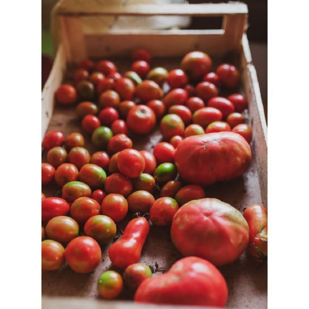 centorti pomodorini