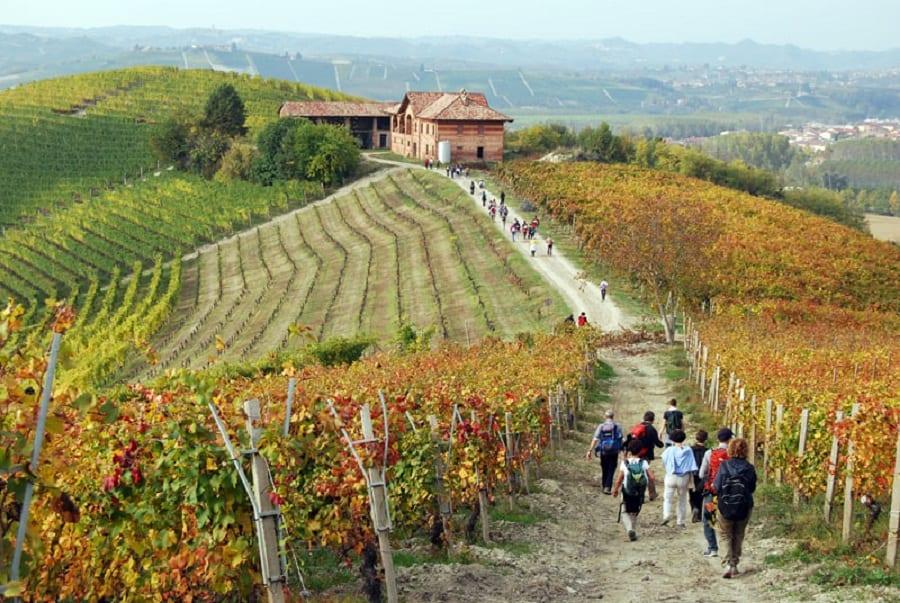 Vigne in autunno a Barolo, con escursione tra i filari e cascina in lontananza