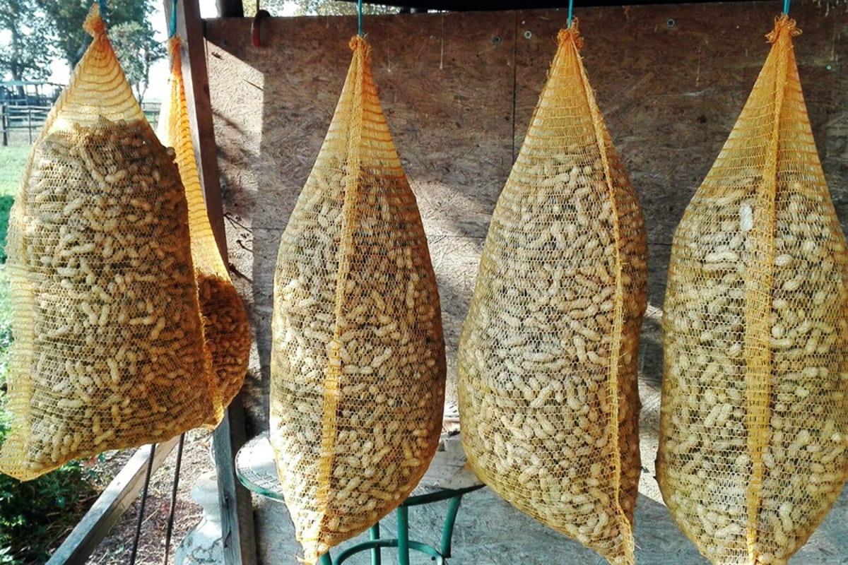 arachidi italiane
