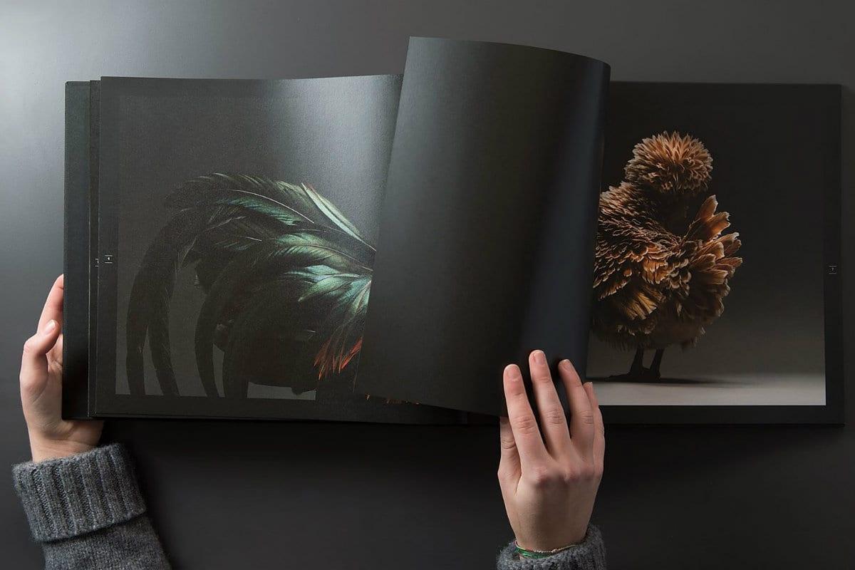 polli libro