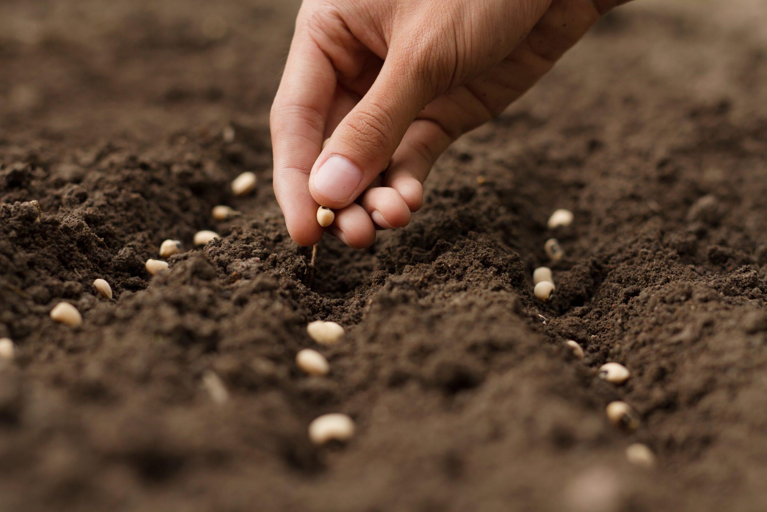 semina manuale in terra su campo arato