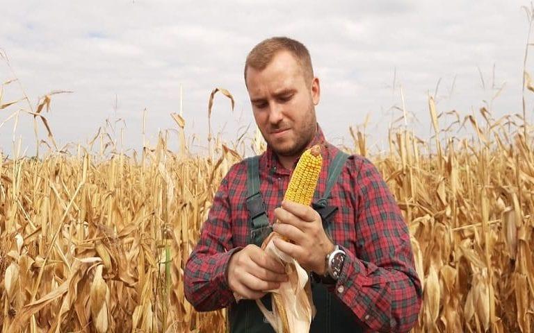 Un ragazzo nei campi sfoglia una pannocchia di mais