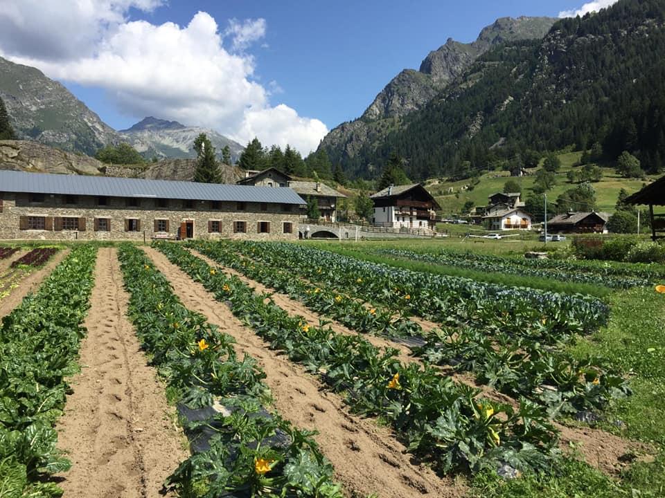 Campo coltivato in montagna a Gressoney