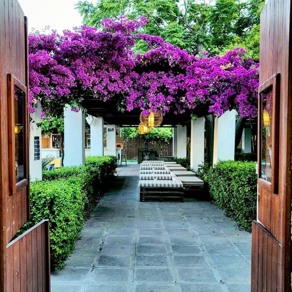 Bouganville in fiore al Giardino di Lipari