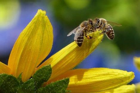 Scopri la storia del santuario di api in Cina