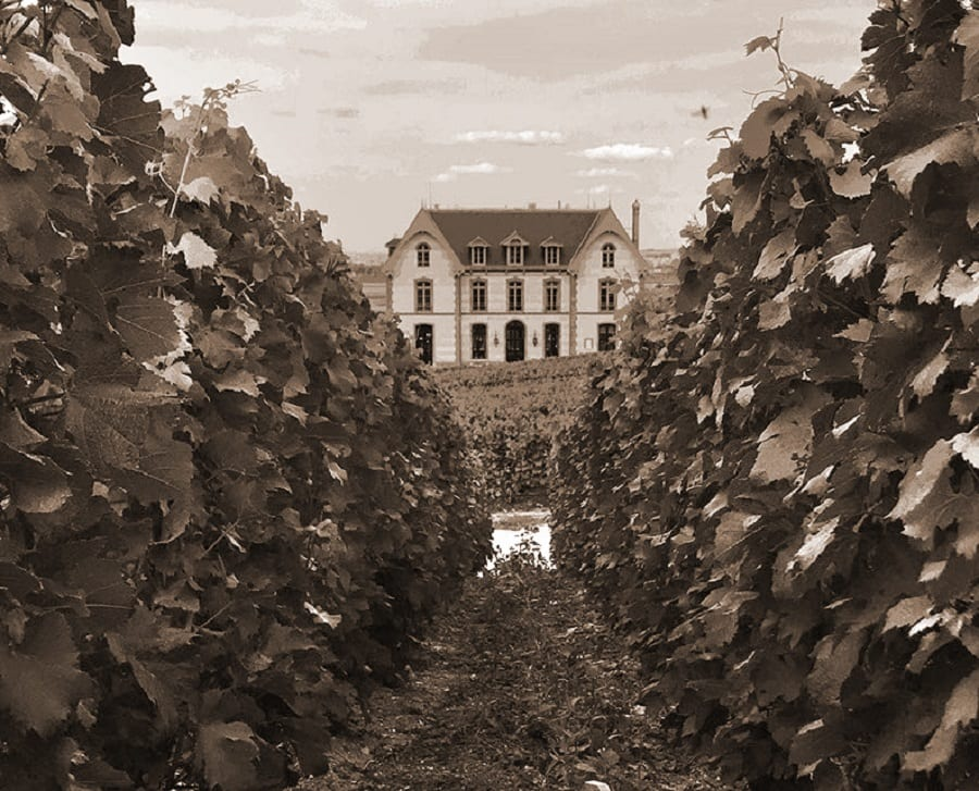 La tenuta nella Champagne di Alberto Massucco