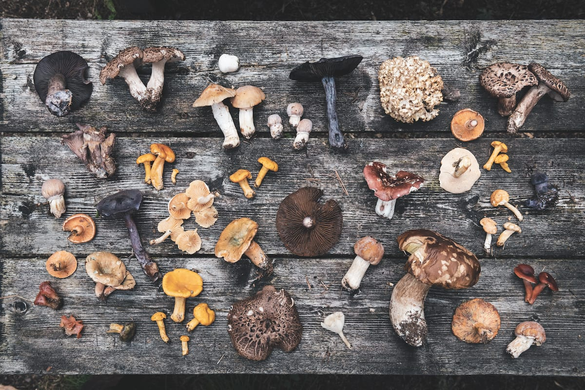 Immagine dal libro Coook the mountain, funghi ©Alex Moling