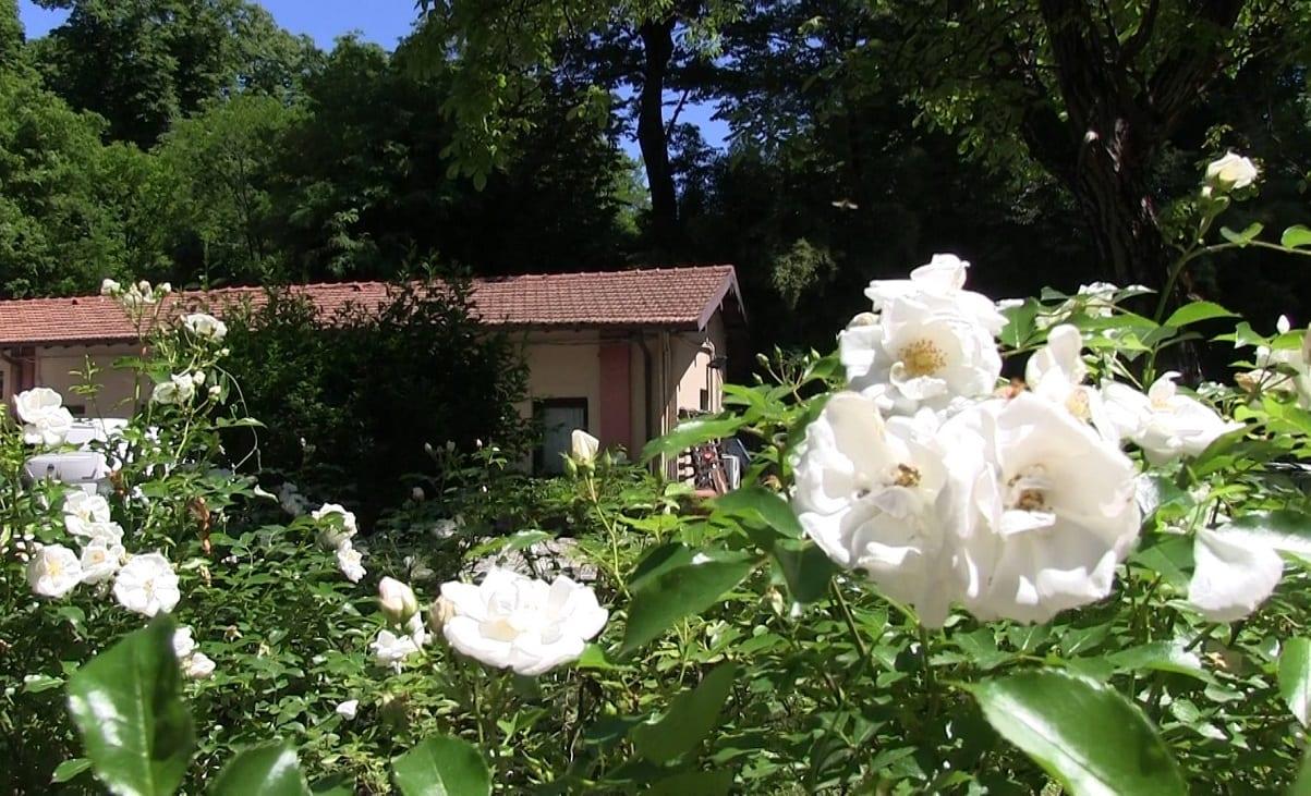 la cascina nascosta spunta tra fiori bianchi