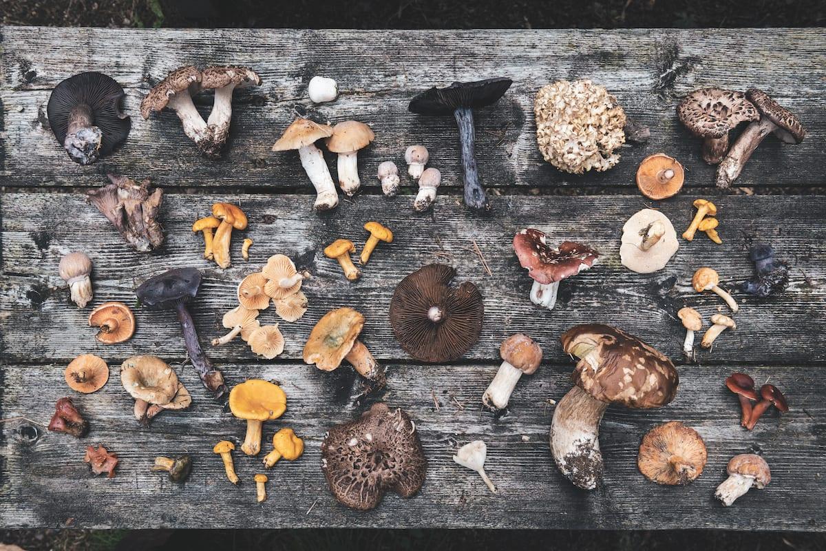 Funghi. Foto di Alex Moling tratta dal libro Cook the mountain