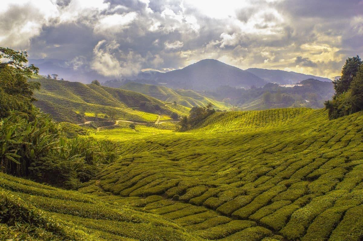 Val di Gresta, nuovo paesaggio rurale nel registro