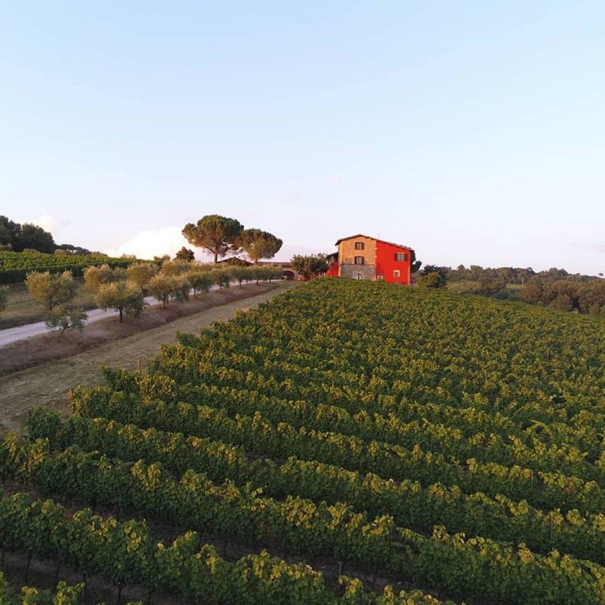 Terre Margaritelli: vini del cuore  da Torgiano, cuore d'Italia