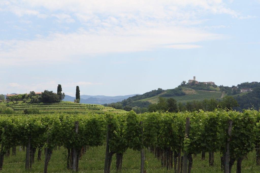 I vigneti di una delle Cantine fornitrici di vinacce oper i vinaccioli di Vigneti oer i vinaccioli di GS Natural