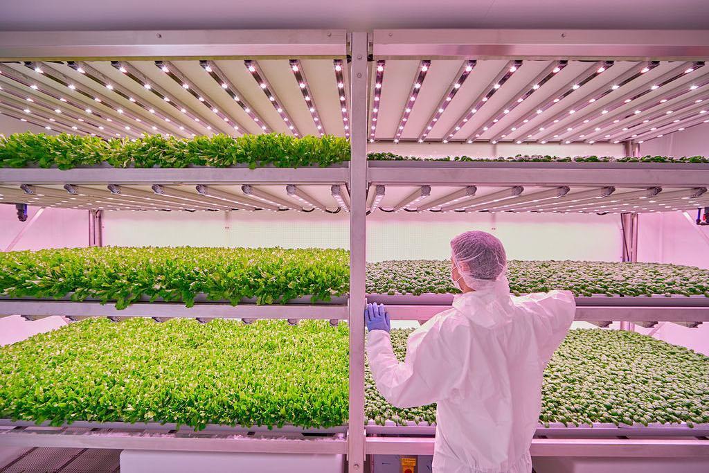 La vertical farm di Planet Farms