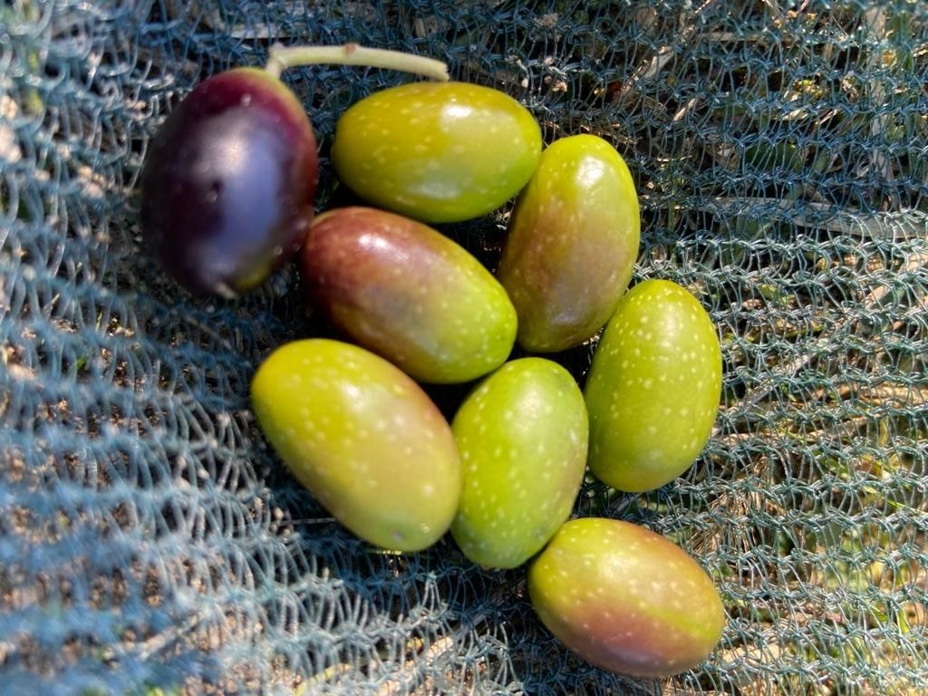 """Le olive """"aulivello"""""""