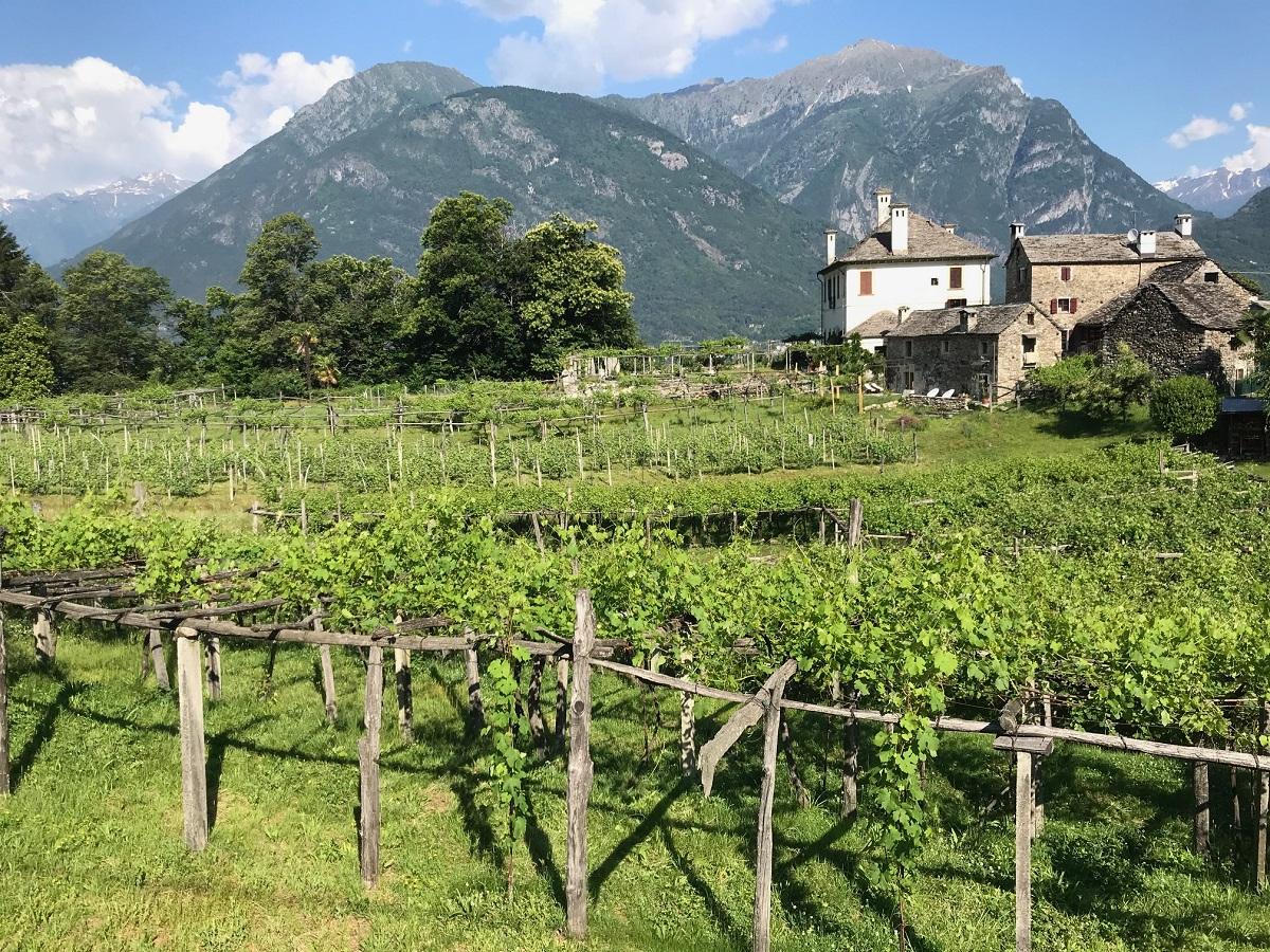 Vigne di Prunent