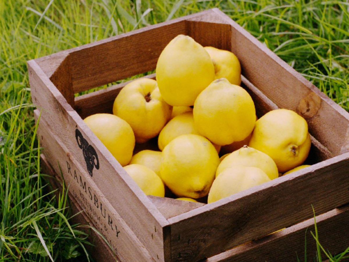 Ramsbury Gin fatto con le mele cotogne