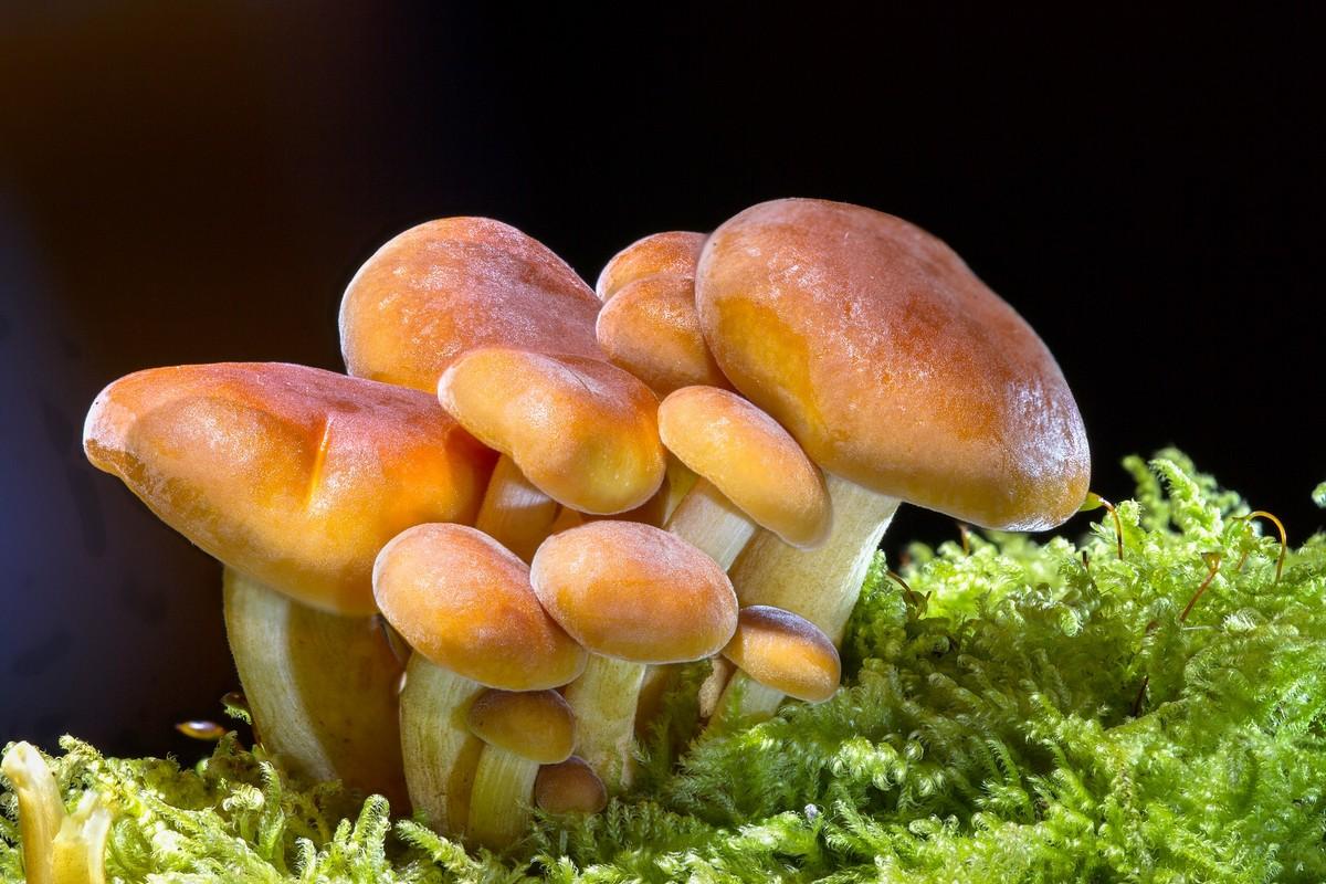 """Scopri il libro sui funghi """"L'ordine nascosto"""""""