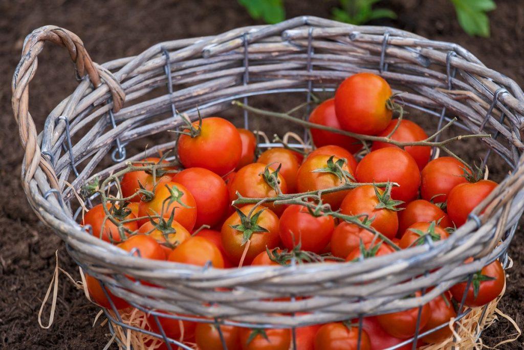 Scopri la frutta e la verdura di stagione di luglio
