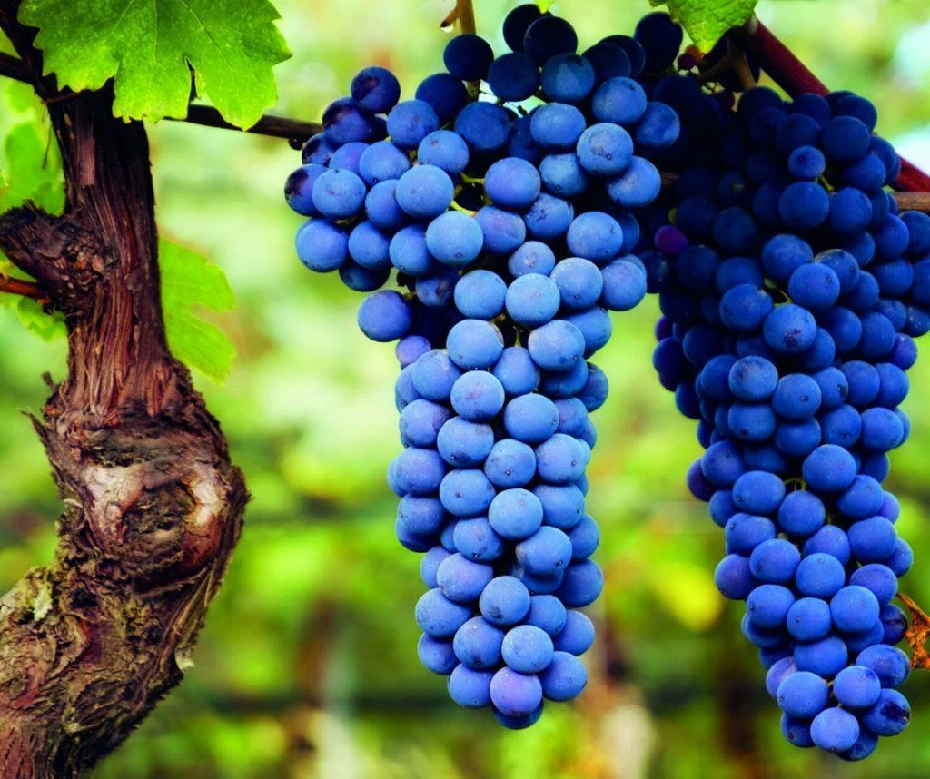 Scopri prodotti e vini tipici del Parco Naturale dello Stelvio