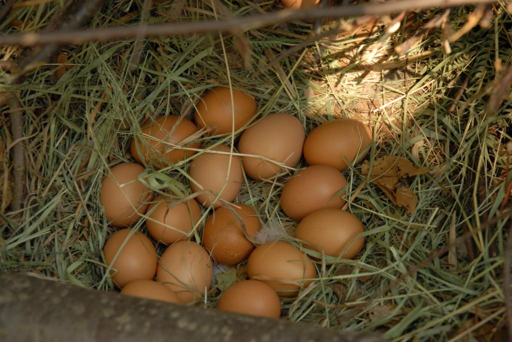 uova di selva