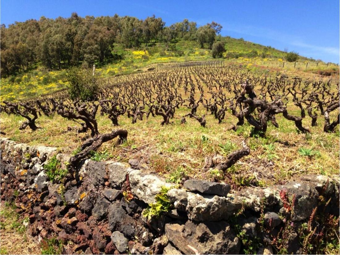 Nel mensile di settembre. Le vigne centenarie: alla ricerca del vino perduto