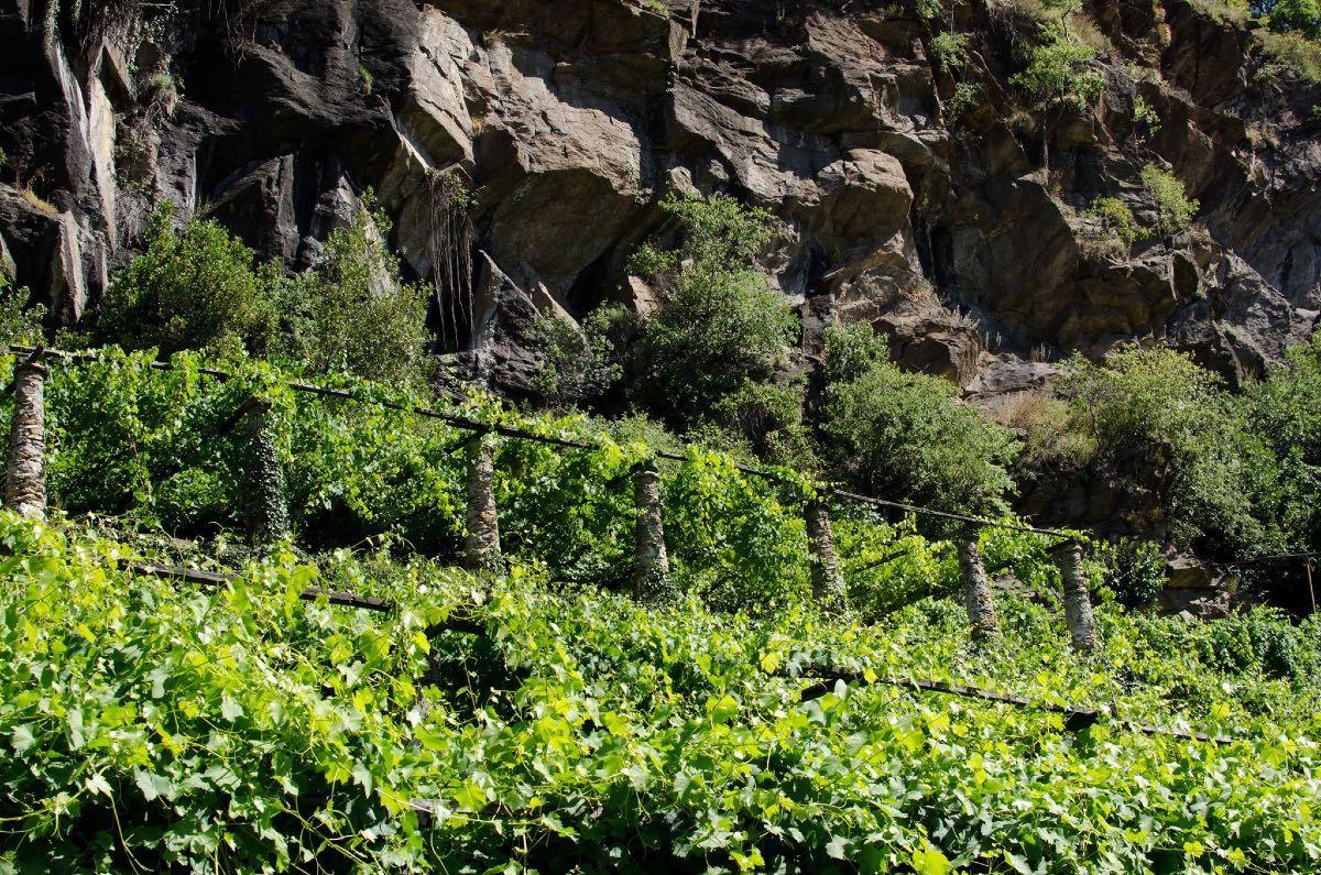 Viticoltura contadina di montagna nel terzo millennio. La storia di Figliej nell'alto Canavese, in Piemonte