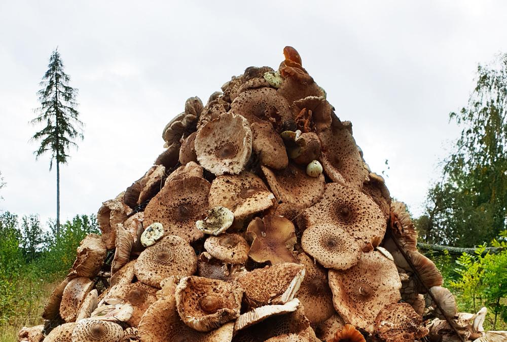 Leggi la storia della capanna di funghi in Svezia