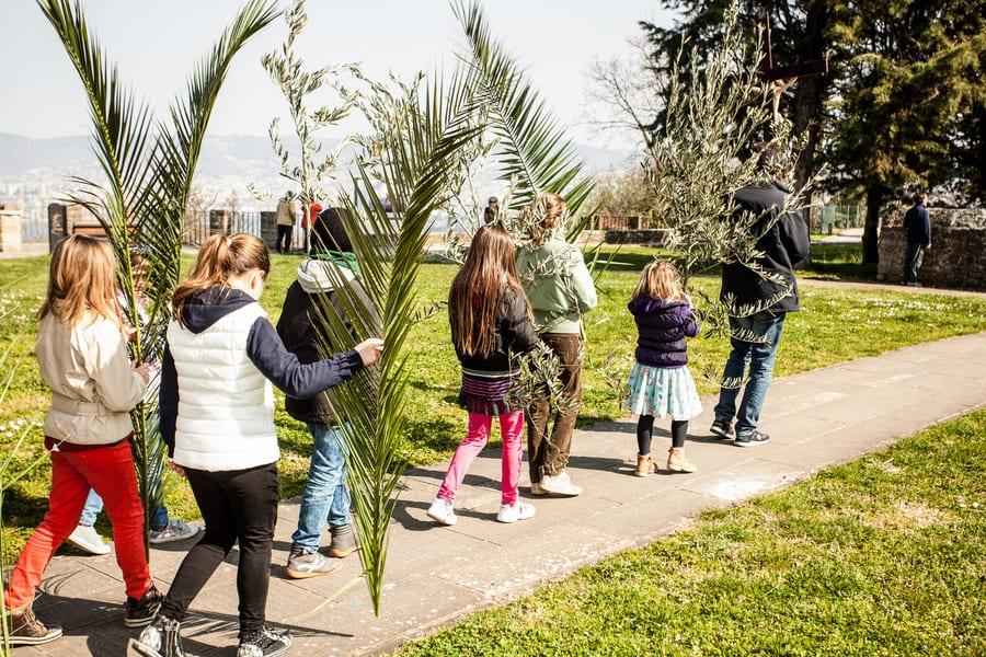 domencia delle palme