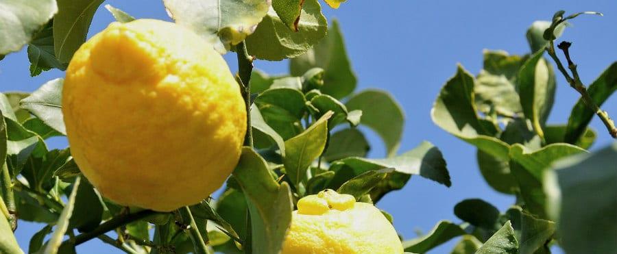 Limone di Rocca Imperiale