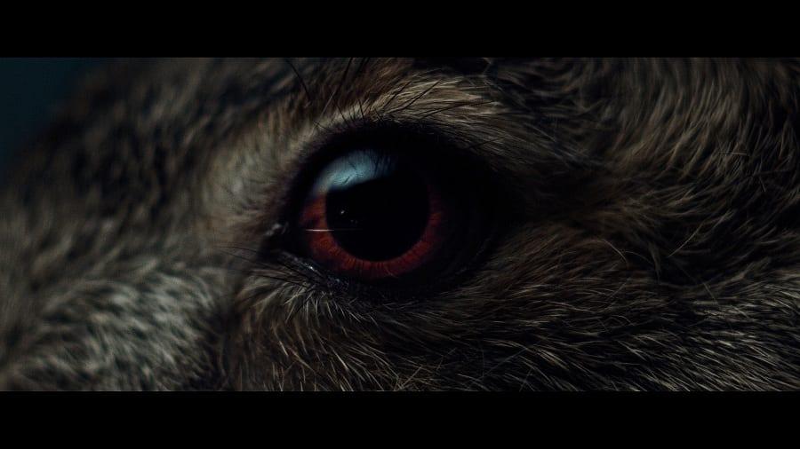 L'occhio di una lepre di profilo, in primo piano