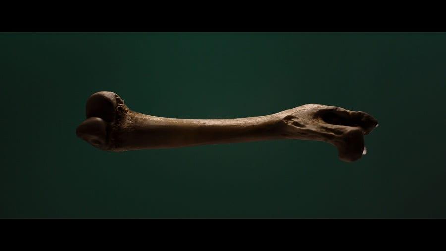 Un osso di lepre su fondo verde