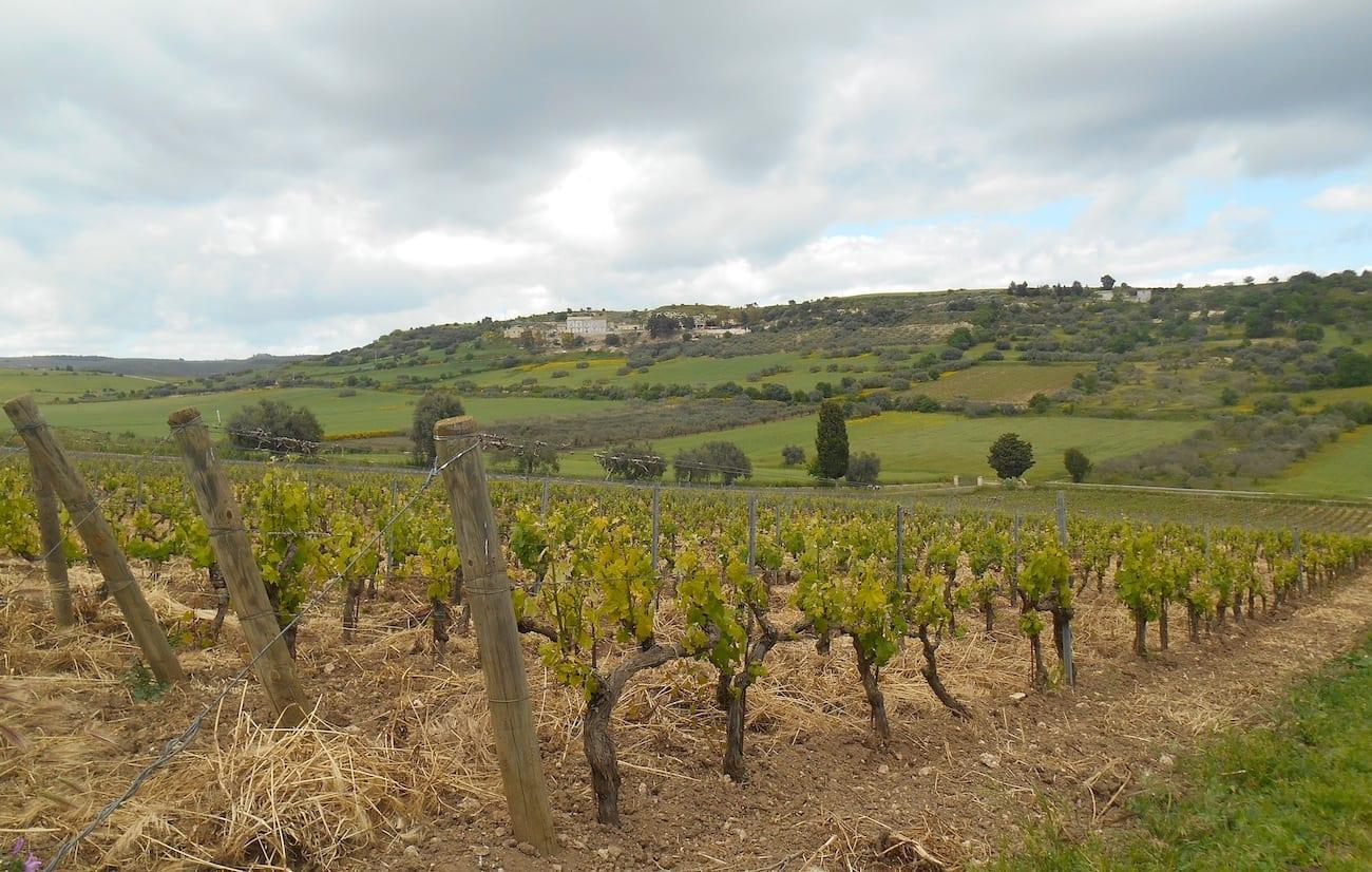 Da Niscemi a Noto alla scoperta dei vini della Sicilia sud-orientale