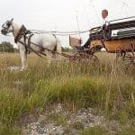 Visita ai Magredi con la carrozza dellagriturismo Gelindo dei Magredi a Vivaro Pn