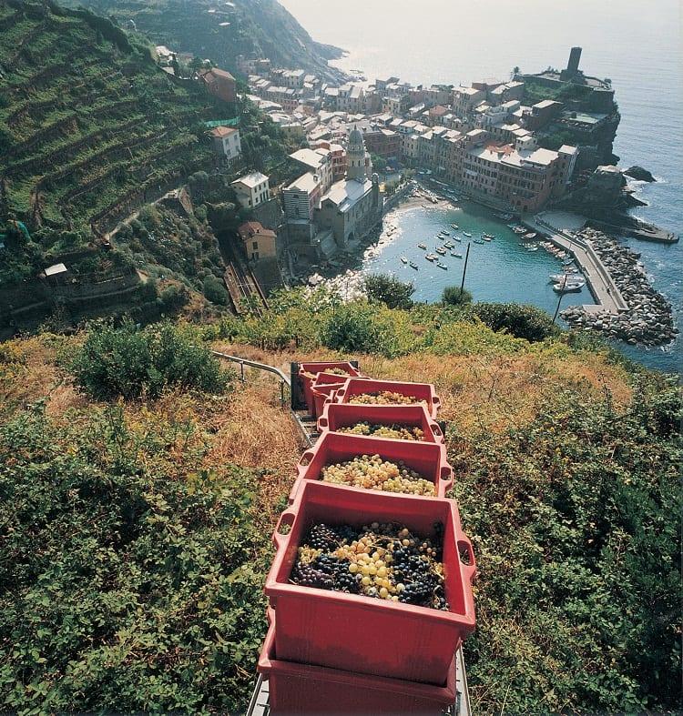 vigneti_Trenino_Vernazza_Cinque Terre 1