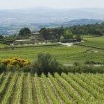 Vigne della cantina Peppucci a Montorsolo Todi Pg