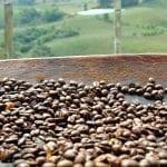 Cafff-Sacha Mama 11