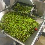 olive frantoi