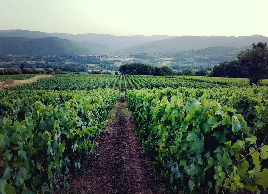 Sorprese in Toscana. Il pinot noir del Mugello