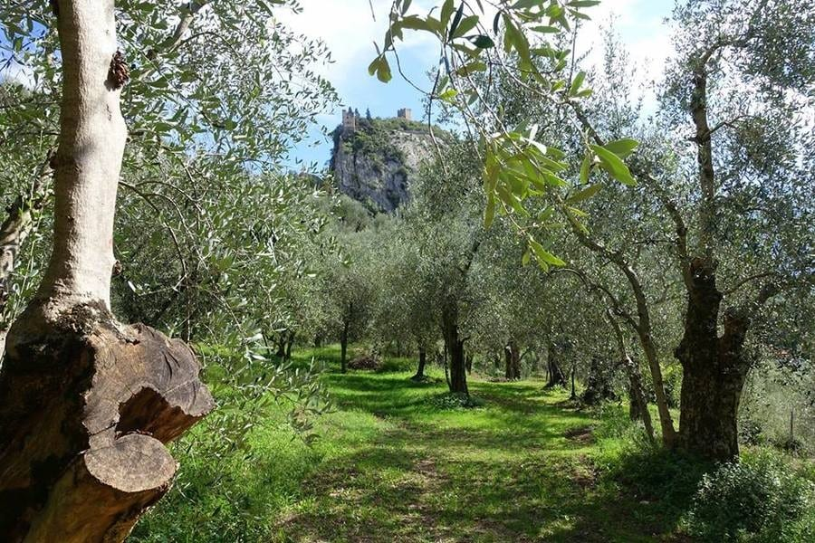 Il miglior olio del Trentino Alto Adige. La produzione regionale e le aziende