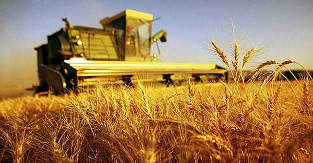 Agrinsieme. L'agricoltura italiana fa sistema?