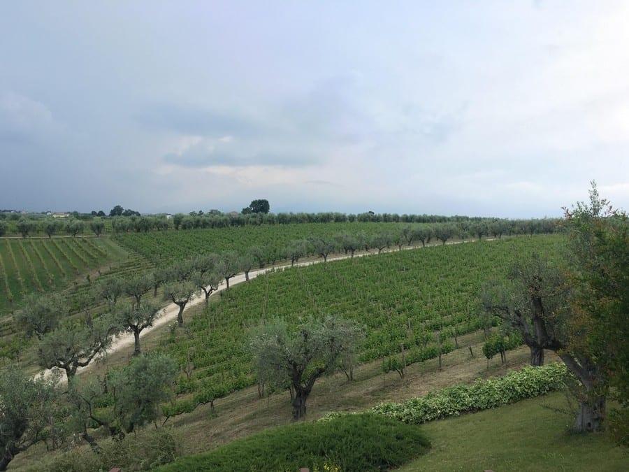 Percorsi: gli itinerari alla scoperta dell'Abruzzo del vino. Guardando la Majella
