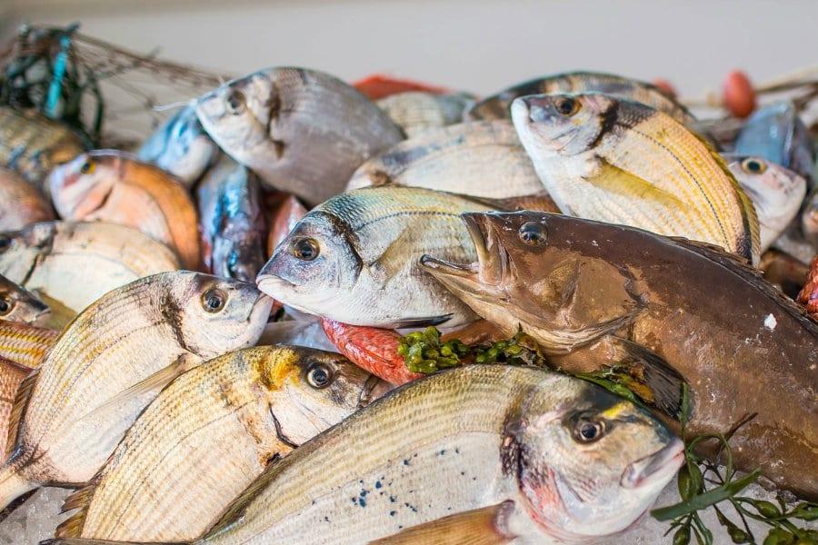 Pesce di stagione, estate nel versante Adriatico Sud. I consigli di: Domenico Cilenti, Pasquale Cetrone, Marco Carone e Floriano Pellegrino